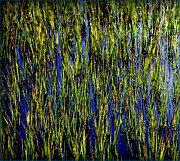 Green And Blue Posters - Water Reeds Poster by Karen Wiles