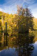 Schoenbuch Posters - Water reflection in autumn Poster by Matthias Hauser