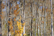 Tree Reflections In Water Prints - Water Reflection of Autumn Print by Benanne Stiens