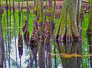 Natchez Trace Parkway Metal Prints - Water Tupelo/Cypress Swamp along Parkway at Mile 122 along Natchez Trace Park-MS Metal Print by Ruth Hager
