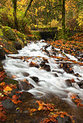 Fall Leaves Photo Originals - Water under the Bridge by Mike  Dawson