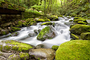 Smokey Mountains Prints - Water under the Bridge Print by Todd Bielby