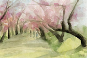 Blossom Tree Artwork Prints - Watercolor Painting of Cherry Blossom Trees in Central Park NYC Print by Beverly Brown Prints
