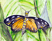 Antenna Paintings - Watercolor tropical butterfly  by Irina Gromovaja