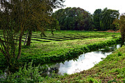 Watercress Photos - Watercress Field by Olivier Le Queinec
