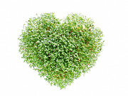 Watercress Art - Watercress heart by Roman Milert