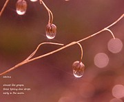 Haiku Framed Prints - Waterdrop Haiku Framed Print by Jeff  Swan