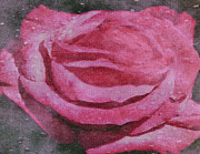 Interior Design Mixed Media - Watered Red Rose by Dennis Buckman