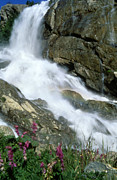 Landscapes Posters - Waterfall Poster by Anonymous