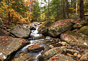 Fall Colors Photography Posters - Waterfall at Bear hollow NH Poster by James Steele