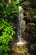 Waterfalls Posters - Waterfall in forest Poster by Elena Elisseeva