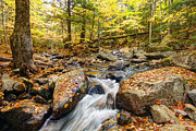 Trout Stream Landscape Framed Prints - Waterfall In The Fall NH Framed Print by James Steele