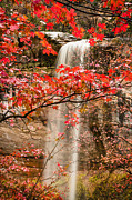 Laura Zirino - Waterfall Through Maple...
