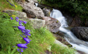 Waterfalls And Bluebells Print by Mircea Costina Photography