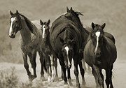 Bands Prints - Waterhole March II Print by Carol Walker