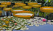 Byron Varvarigos - Waterlilies All --...
