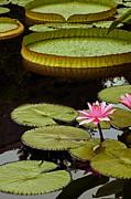 Byron Varvarigos - Waterlilies And Platters Vertical Romance