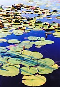 St. Marks Prints - Waterlilies Print by Jan Amiss Photography