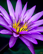 Chris Lord - Waterlily #23