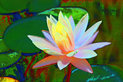 Waterlily Prints - Waterlily Print by Charline Xia