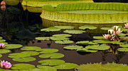 Byron Varvarigos - Waterlily Charm