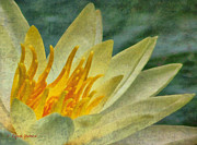 Lynne Jenkins - Waterlily