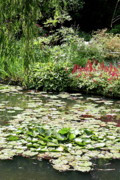 Waterlily Pond Giverney Print by Christiane Schulze