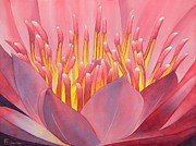 Chinese Watercolor Posters - Waterlily Poster by Robert Hooper