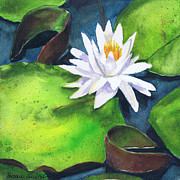 White Waterlily Paintings - Waterlily by Susan Herbst