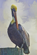 Forida Prints - Waterway Pelican Print by Deborah Benoit