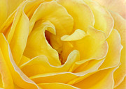 Rosette Photo Posters - Waves of Yellow Poster by Sabrina L Ryan