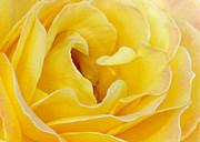 Sabrina L Ryan - Waves of Yellow