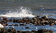 Flying Seagulls Framed Prints - Waves Wind and Whitecaps Framed Print by John Telfer