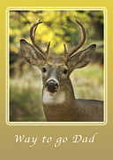 Michael Peychich - Way to go Dad Congratulations on a Successful Deer Hunt