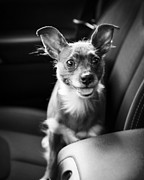 Pet Photo Prints - We Goin for a Ride Print by Edward Fielding
