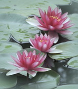 Kim Doran - We Three Waterlily