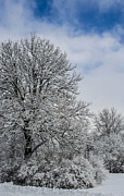 Winter Storm Photos - Wealth of Snow After Nemo by Deborah Smolinske
