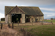 Old Wooden Fence Posts Prints - Weathered Barn Of Skagit County Print by Kent Sorensen