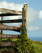 Weathered Fence Print by Vivian Christopher