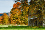 Fall Colors Posters - Weathered Vermont barn  Poster by Jeff Folger