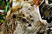 Debbie Portwood Prints - Weathered Wood Print by Debbie Portwood