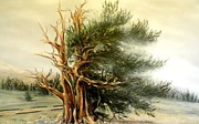 Oldest Living Tree Posters - Weathering the Storm Poster by Deborah Uhl