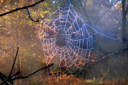 Spider Digital Art - Web by Bill Cannon