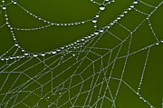 Dave Weth - Web of Dew