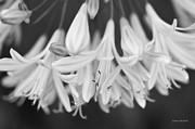 Donna Blackhall - Wedding Bells Rang Softly