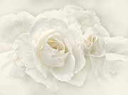 White Florals Framed Prints - Wedding Day White Roses Framed Print by Jennie Marie Schell