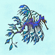 Sea Dragon Framed Prints - Weedy Seadragon Framed Print by Jane Schnetlage