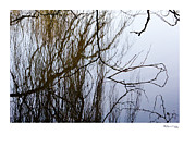 Xoanxo Cespon Framed Prints - Weeping Reflections  Framed Print by Xoanxo Cespon