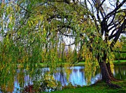 Judy Minderman Framed Prints - weeping willow in Montreal Framed Print by Judy Minderman