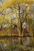 Weeping Willow  Print by Isabel Poulin